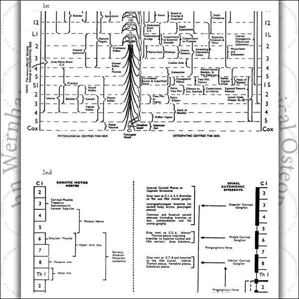 Chart of the Osteopathic Centres and of the Somatic and Autonomic Nervous Systems