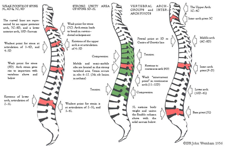 Spine Arches Chart